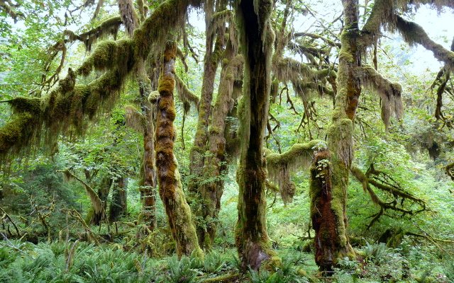 Yes it did rain today in hoh rain forest