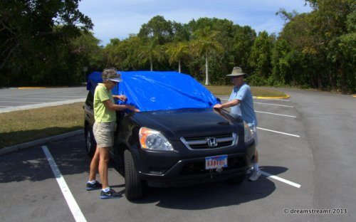 picture of tarp on car to stop vultures